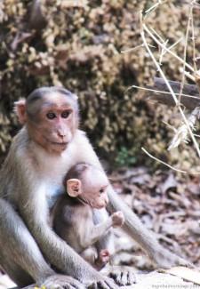 Mumbai-Mornings-Borivali-National-Park-Monekys